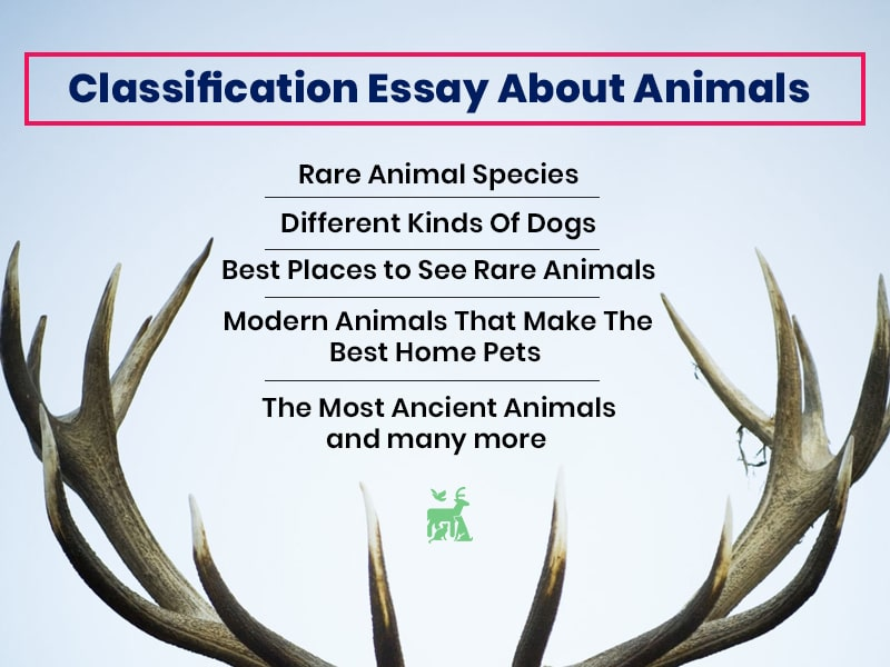 Classification Essay About Animals